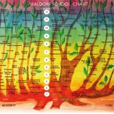 Kodėl Valdorfas veikia: iš neuromokslinės perspektyvos