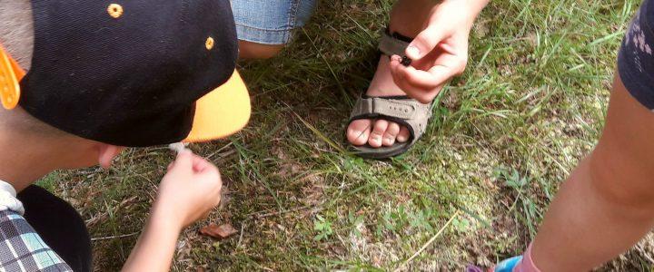 Planuojant vaikų vasarą